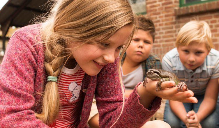 Hilfe unser Lehrer ist ein Frosch (c) Little Dream Entertainment