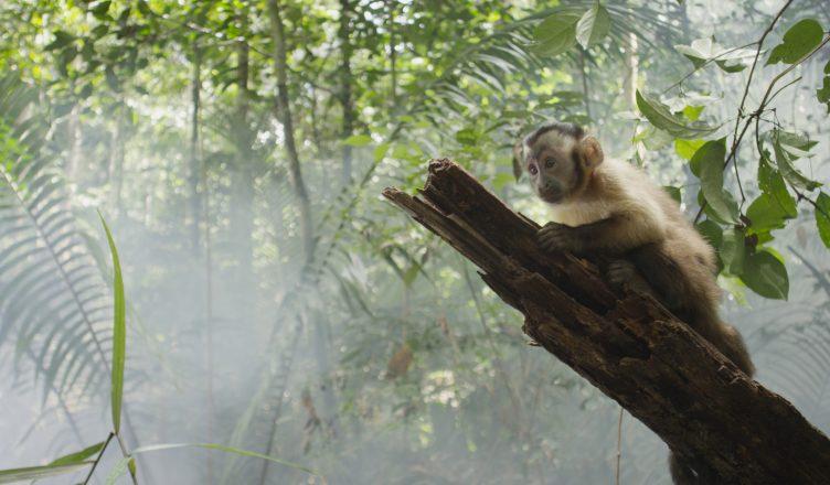 Amazonia - Abenteuer im Regenwald (c) Polyband